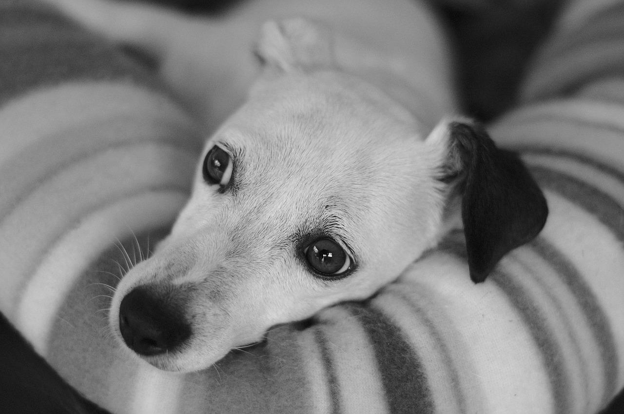 dog-3647921_1280